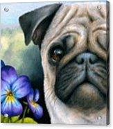 Dog #133 Acrylic Print