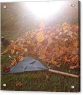 Dog And Autumn Leaves Acrylic Print
