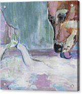 Dog And Spilled Milk Acrylic Print