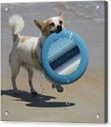Dog Beach Bliss Acrylic Print