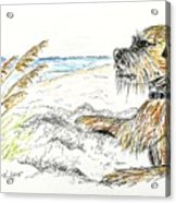 Dog By The Sea Acrylic Print