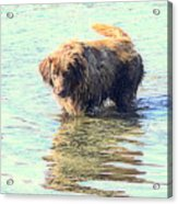 See The Sea Monster Coming Up From The Deep Dark Sea Looking For Something To Eat  Acrylic Print
