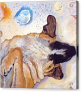 Dog Dreams Acrylic Print