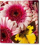 Dog Face Butterfly On Pink Mums Acrylic Print