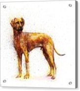 Dog fantasy  Acrylic Print
