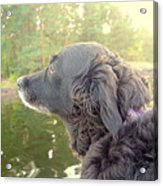 In The Autumn The Dog Looks Back At The Summer   Acrylic Print