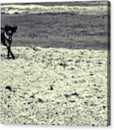 Dog Frolicking On A Beach Acrylic Print