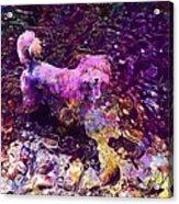 Dog Happy Nature River  Acrylic Print