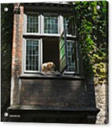 Dog In A Window Above The Canal In Bruges Belgium Acrylic Print