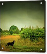 Dog In Chesire England Landscape Acrylic Print