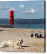 Dog Lying On The Beach In Front Of Red Lighthouse Of Cres Acrylic Print