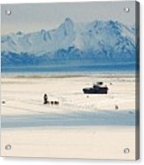 Dog Musher At Cook Inlet - Alaska Acrylic Print