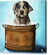 Dog N Suds Acrylic Print by Leah Saulnier The Painting Maniac