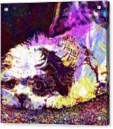Dog Noddy Lhasa Apso Pet Puppy  Acrylic Print