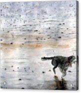 Dog On Beach Acrylic Print