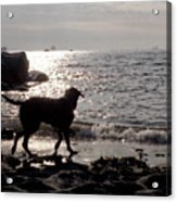 Dog On Beach Wc 2 Acrylic Print