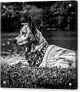 Dog On The Lake Acrylic Print
