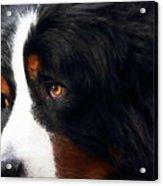 Dog . Photo Artwork Acrylic Print by Wingsdomain Art and Photography