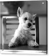 Dog Sitting On The Table Acrylic Print