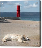 Dog Sleeping On The Beach In Front Of Red Lighthouse Of Cres Acrylic Print