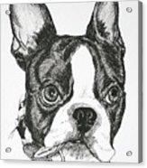 Dog Tags Acrylic Print
