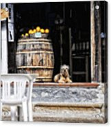 Dog Tavern With Oranges Acrylic Print