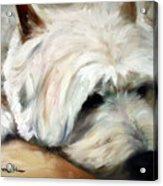 Dog Tired Acrylic Print