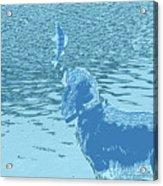 Dog Vs Perch 2 Acrylic Print