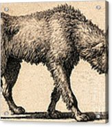 Dog With Rabies, Engraving, 1800 Acrylic Print