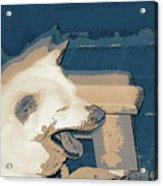 Doge Sneeze 3 Acrylic Print