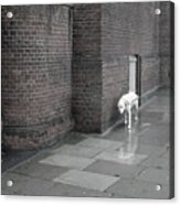 Doggie Strolling 1 Acrylic Print