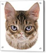 Kitten T-shirt Acrylic Print