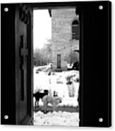 Dogs At The Grave Of Vlad Tepes Acrylic Print