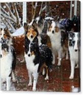 Dogs During Snowmageddon Acrylic Print