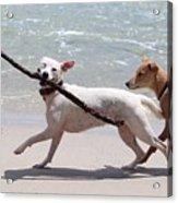 Dogs On The Beach Acrylic Print