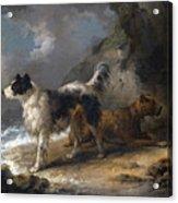 Dogs On The Coast Acrylic Print