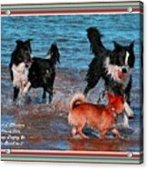 Dogs Playing On The Beach No. 2 L A With Decorative Ornate Printed Frame. Acrylic Print