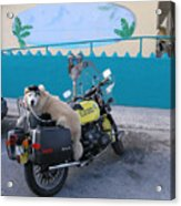 Dogs Rule Acrylic Print