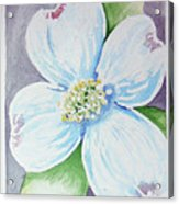 Dogwood Bloom Acrylic Print