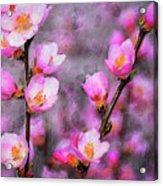 Dogwood Blossoms Acrylic Print