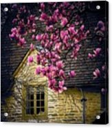 Dogwood By The Window Acrylic Print