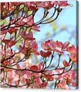Dogwood Flowering Trees Pink Dogwood Flowers Baslee Troutman Acrylic Print