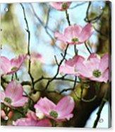 Dogwood Flowers Pink Dogwood Tree Landscape 9 Giclee Art Prints Baslee Troutman Acrylic Print