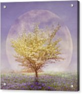 Dogwood In The Lavender Mist Acrylic Print