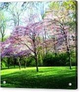 Dogwood Spring Acrylic Print