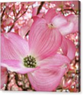 Dogwood Tree 1 Pink Dogwood Flowers Artwork Art Prints Canvas Framed Cards Acrylic Print