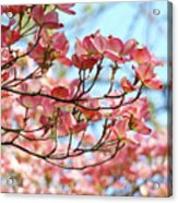 Dogwood Tree Landscape Pink Dogwood Flowers Art Acrylic Print