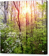 Dogwoods In The Forest Acrylic Print