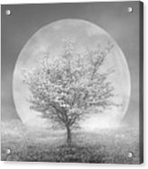 Dogwoods In The Moon Black And White Acrylic Print