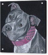 Dolce Acrylic Print by Stacey Jasmin